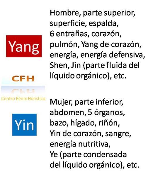 Image result for yin yang tipos de cuerpo